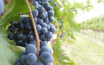 Coltivazioni Biodinamiche e Degustazione