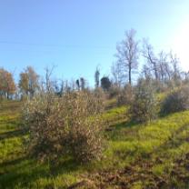 Azienda Agricola ORO DI DIAMANTI